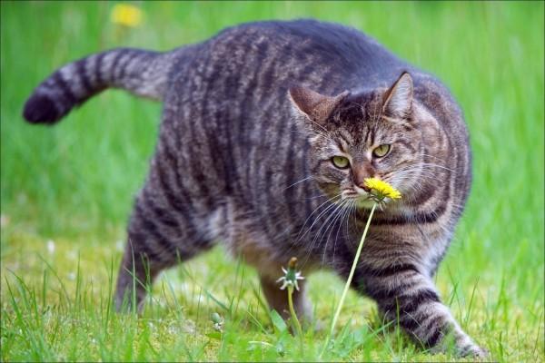 Gato olisqueando una flor