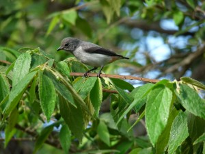 Postal: Pájaro agarrado a una rama