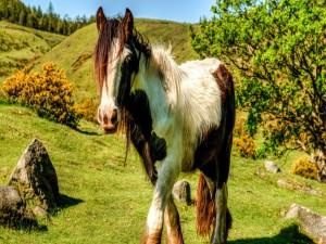 Un caballo con larga crin