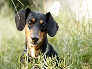 Un perro con grandes ojos