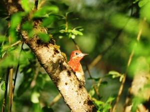 Postal: Un pájaro en el tronco de un árbol