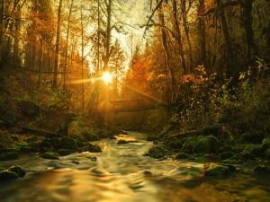 Postal: Puente de madera sobre un bonito río