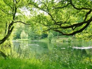 Grandes árboles y plantas verdes a orillas del río