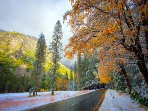 Postal: Nieve y hojas otoñales a ambos lados de una carretera