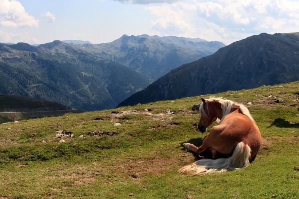 Caballo tumbado observando las montañas