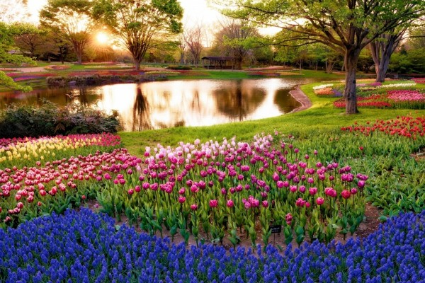 Estanque rodeado de tulipas y jacintos