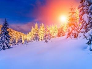 Tibios rayos de sol entre pinos y nieve
