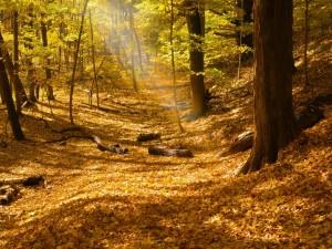 Hojas secas y troncos en el suelo de un bosque otoñal