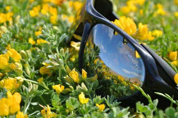 Gafas de sol sobre las flores amarillas