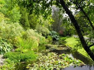 Postal: Estanque en un jardín