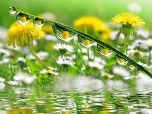 Postal: Flores reflejadas en las gotas de agua