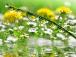 Flores reflejadas en las gotas de agua