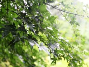 Hojas verdes en las ramas del árbol