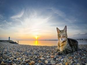 Postal: Un gato tumbado sobre las piedras en un bonito lugar