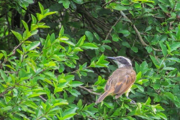 Pájaro sobre la rama de un árbol
