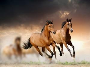 Caballos marrones corriendo en el campo