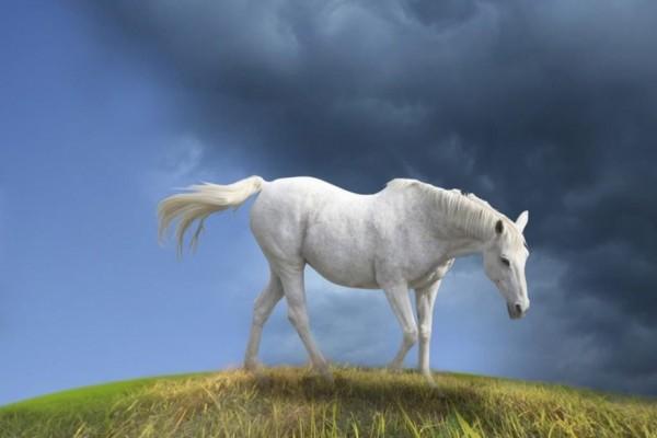 Caballo blanco solitario