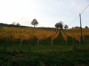 Postal: Viñedo en otoño