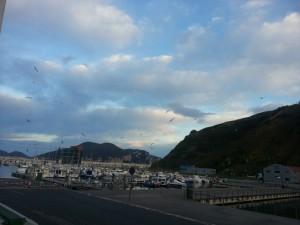 Postal: Gaviotas en un puerto