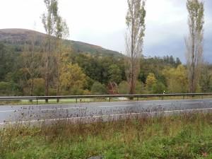 Árboles y un puente junto a una carretera