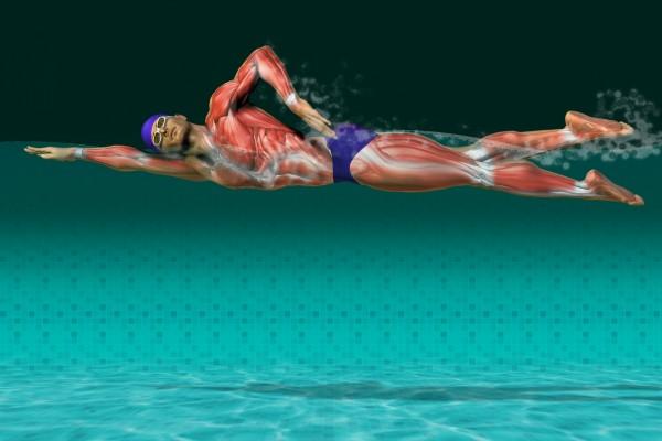 Músculos de un nadador