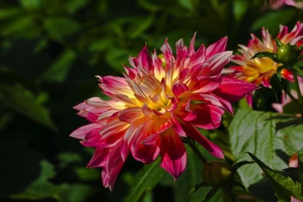 Hermosa flor de primavera