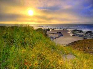 Postal: Mañana pacífica sobre la orilla del mar