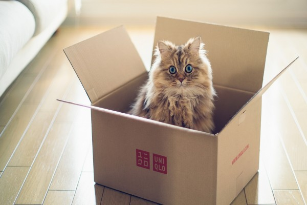 Lindo gato dentro de una caja de cartón