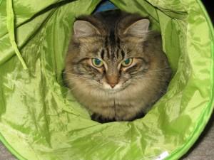 Gato en un túnel de tela verde