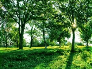 Sol iluminando los verdes árboles