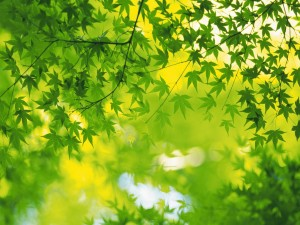 Postal: Ramas con bonitas hojas verdes