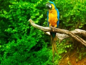 Postal: Loro con bonito plumaje sobre una rama
