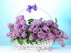 Postal: Canasta de mimbre con syringas color lila