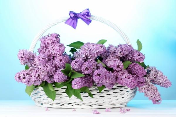 Canasta de mimbre con syringas color lila