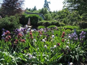Postal: Jardín con esbeltos gladiolos y árboles
