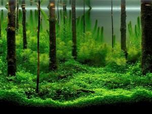 Peces en un bosque bajo el agua