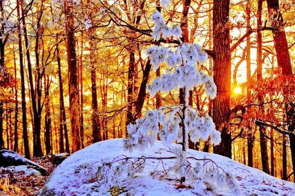 La luz del sol en un bosque nevado