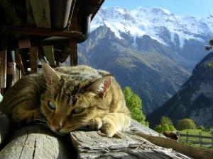 Postal: Gato tomando el sol de la mañana