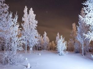 Noche de invierno en el bosque