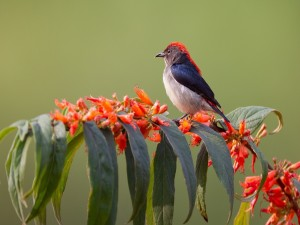 Vistoso pájaro en una rama con hojas y flores