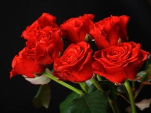 Un magnífico ramo de rosas rojas