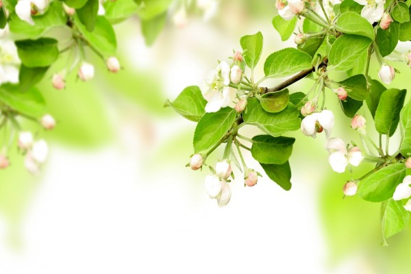Flores brotando en las ramas