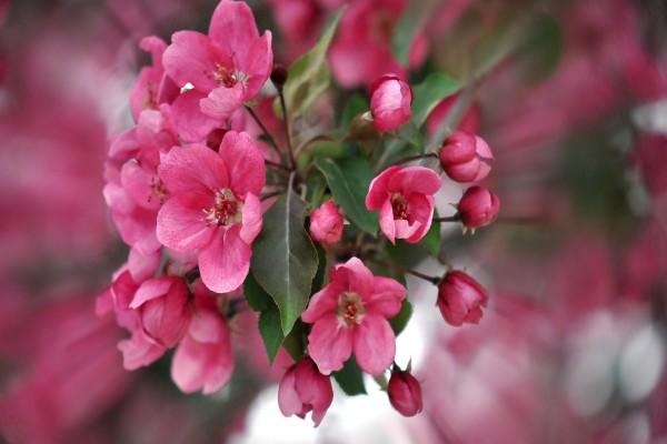 Hojas y pequeñas flores rosas