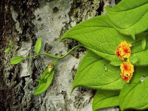 Postal: Una simpática rama tumbada en una hoja
