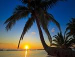 El sol del amanecer visto junto a las palmeras