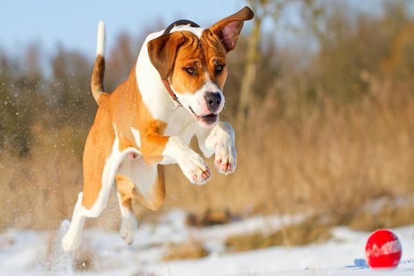 Perro jugando sobre la nieve con una pelota roja