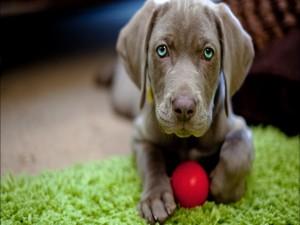 Postal: Cachorro con una pelota roja