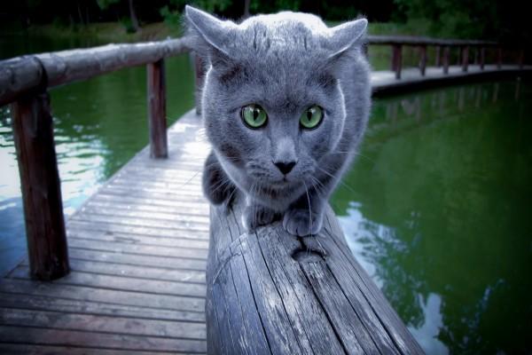 Gato gris sobre una barandilla junto al agua