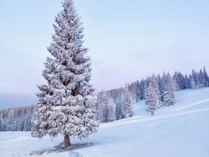 Bello paisaje cubierto de nieve