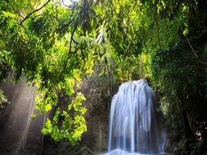 Postal: Árboles junto a una cascada